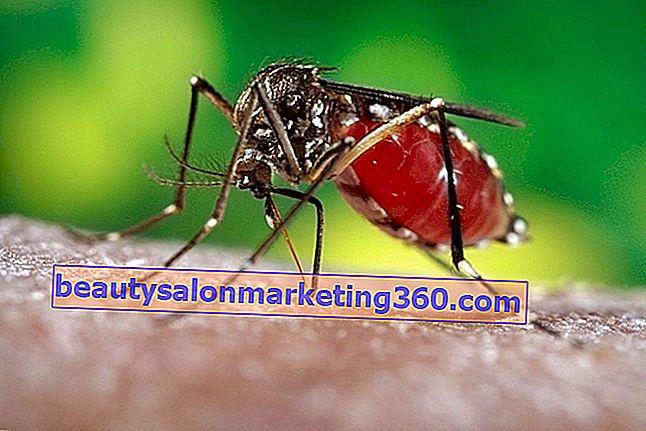 pierderea în greutate după febra dengue